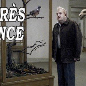 L'APRÈS-SÉANCE – Un pigeon perché sur une branche philosophait sur l'existence