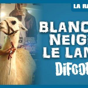 Blanche Neige le Lama dans La Radio Libre